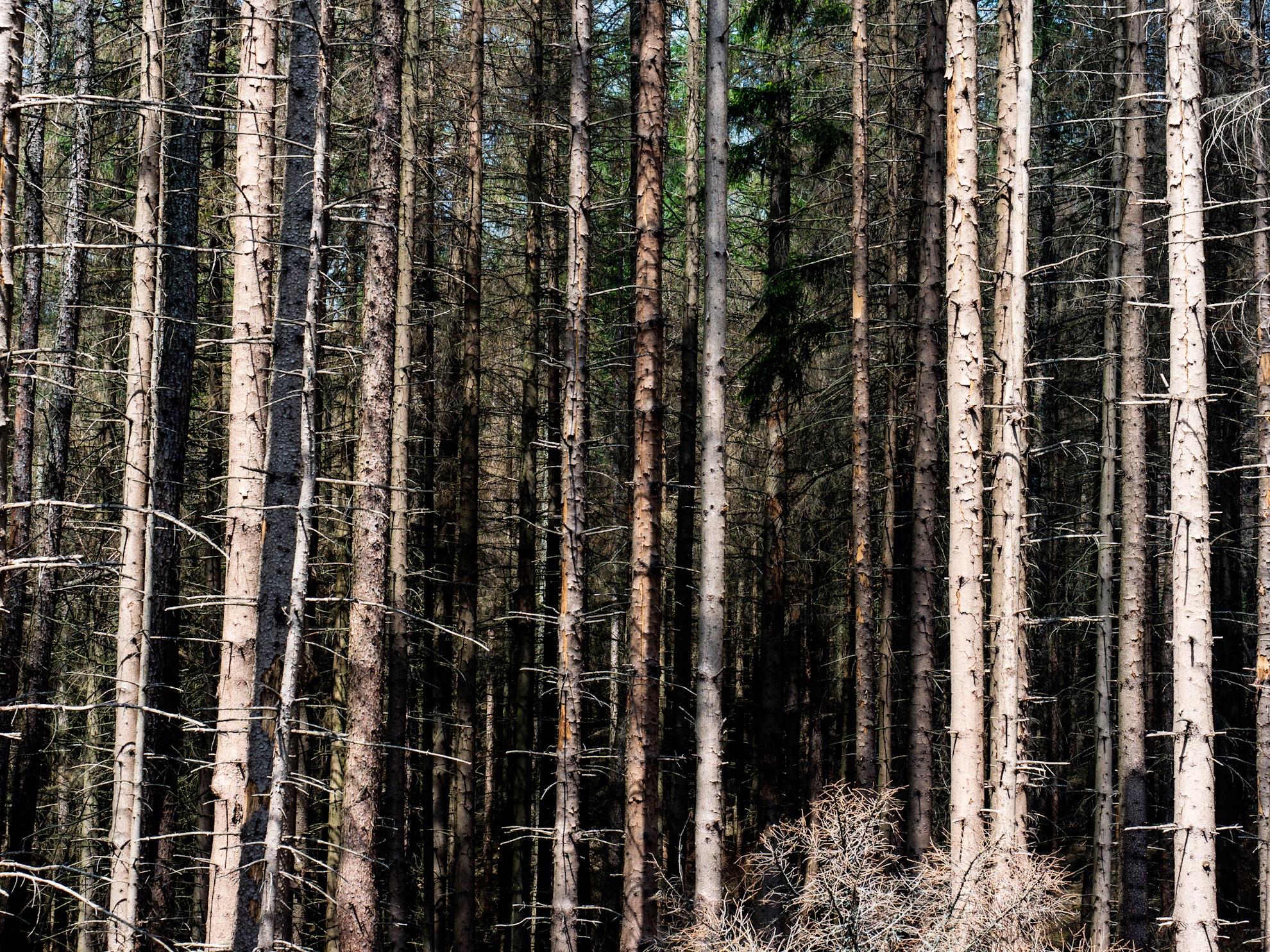 Borkenkäfer Wald