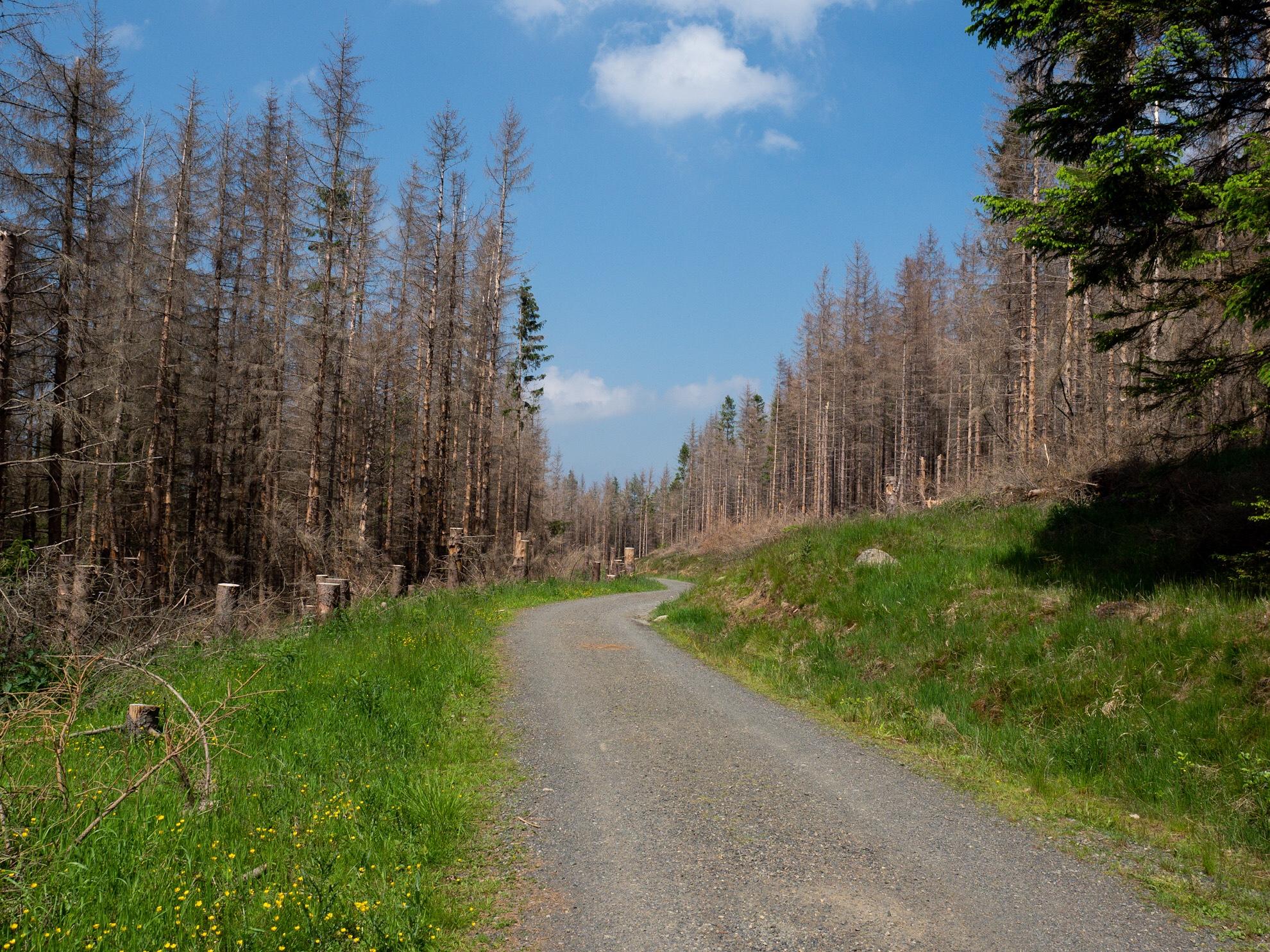 Auf dem Jagdweg in Richtung Plessenburg